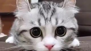 Adorable Cute kitten scene