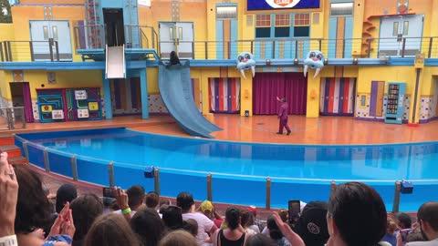 Sea World Orlando Seal Show