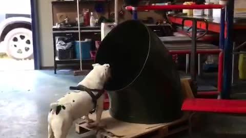 Bulldog Boris is very helpful on the workfloor