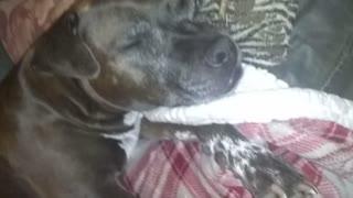 The cutest dog