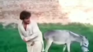 Fight with donkey