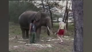 Unexpected Animal attack #shorts