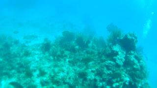 Cancun Mexico Carribean Scuba Diving Part 5