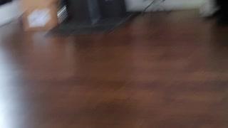 Dog watching cat watching fish 🐟