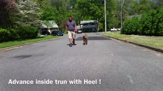 Training your dog to become aggressive