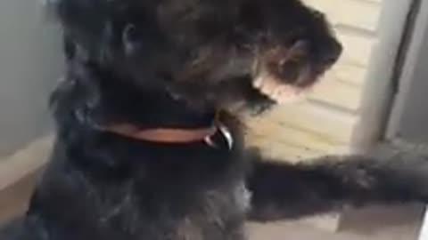 El perro que se robó la dentadura de su dueña se convierte en una celebridad en las redes