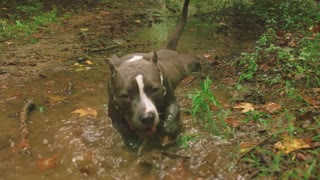 Dog Hilariously playing in river water.