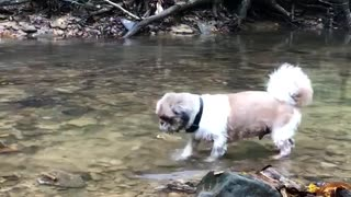 Small white dog in shallow river