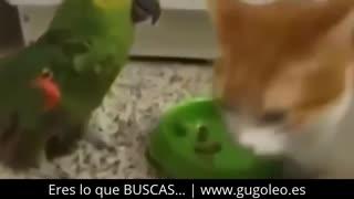 videos whatsapp ANIMALES LOCOS GRACIOSOS