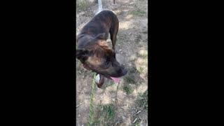 Dumped Dog Learns Love