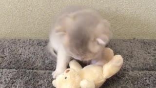 Adorable kitten plays with teddy bear best friend
