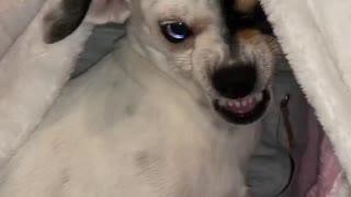 Grumpy Dog has Beautiful Eyes