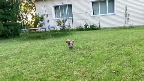 Dog loves play
