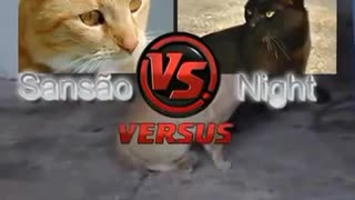 Two crazy ninja cats fighting