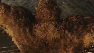 Godzilla vs Kong 02
