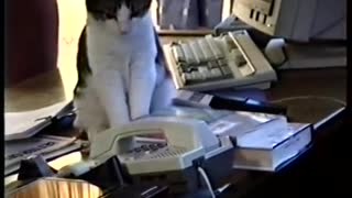 Cat and office phone
