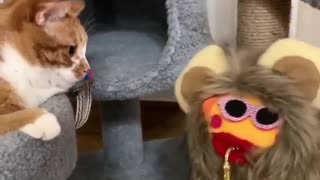 kitty play with toys