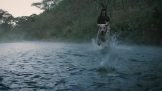 cute dog catches a ball in a river in slow motion