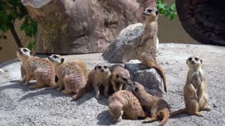 World Peoples Funny Cute Animals Earth Peoples