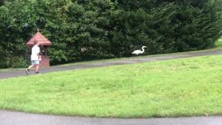 Boy has close encounter with the neighborhood egret