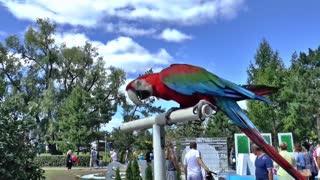 perroquets vert Le meilleur du Monde