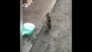 Funny animals playing around