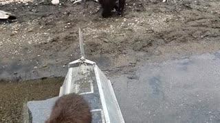Curious Cubs Investigate Man in Hammock