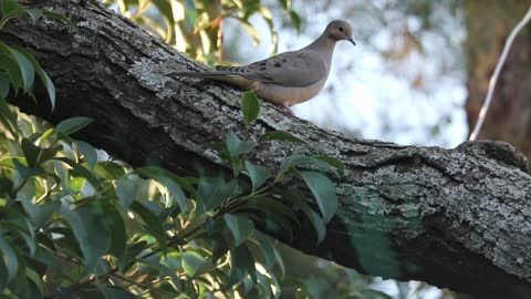 beautiful birds singing 2