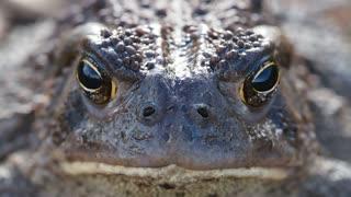 Frog viral video