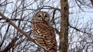 Owl cheats death by mere inches, flies right in front of truck