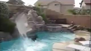 Funny animal video!