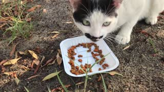 This cat eats food on the white plate