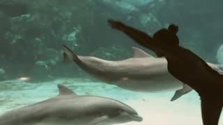 Girl Dance In Dolphin Aquarium
