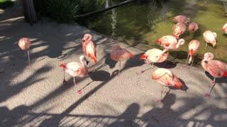 Flamingo Yoga class