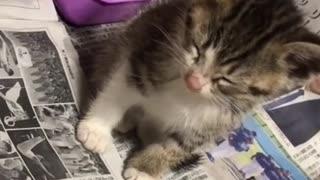Watch a little kitten fall from sleep😁🤣