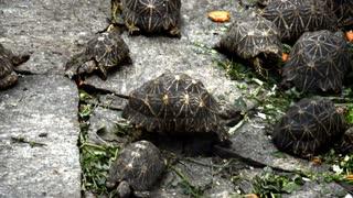 Speedy Turtle Pushes Up Hard