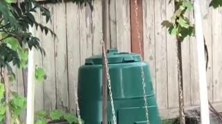 Little Raccoon Having Fun Playing on Swings