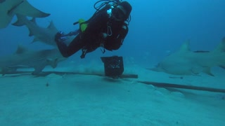 Lemon Shark Dive and Feeding