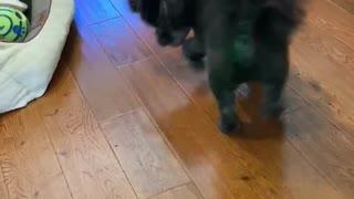 Toby doing his dance