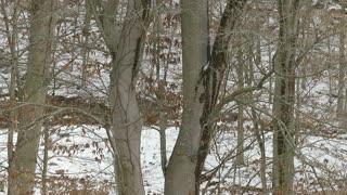 Deer olympics