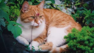 What a wonderful and nice cat it is