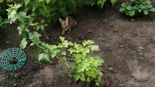 The cat is under the bushes.