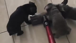 """Watch these puppies """"help out"""" with the housework"""