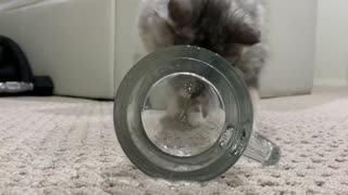Two-faced kitten funny video! Try to fit in a cup