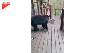 Cat Scares Off Bear!
