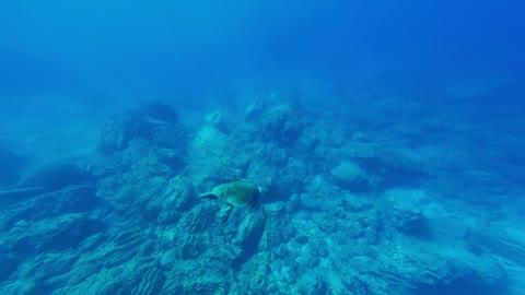Hawksbill sea turtle in the Sea 7 - man & camera
