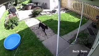 Flying Dog Caught On Camera