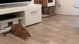 Cat immediately reacts with impressive jump