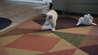Kitten Sharpens Skills with Toilet Paper Roll