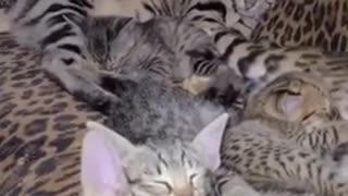 Sleeping Savannah's